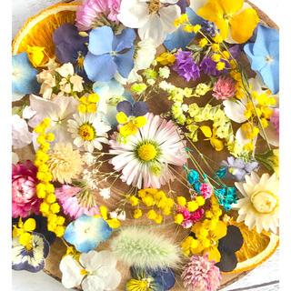 ドライフラワー花材セットNo.171⁑カラフルバラエティー (ドライフラワー)