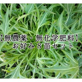 【無農薬・無化学肥料】野菜とハーブの苗(その他)