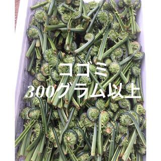 山形県産 天然 山菜 (太)コゴミ 300グラム以上