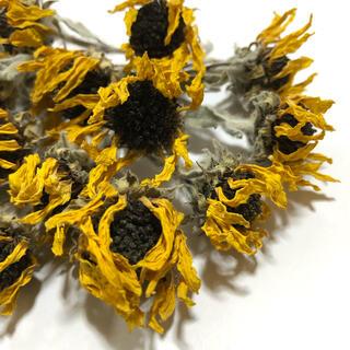 ミニひまわり 15本 ドライフラワー ハーバリウム レジン 花材 自然 Q(ドライフラワー)