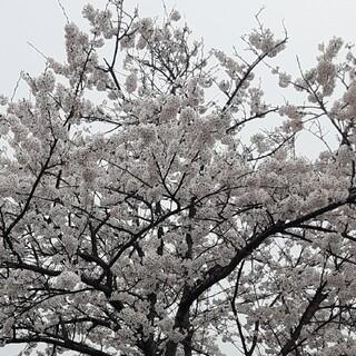 コバヤシセイヤク(小林製薬)の専用(その他)