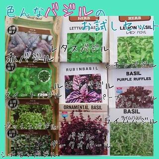 バジル お試しセット 家庭菜園 園芸 種子 種 野菜の種 ハーブの種 プランター(野菜)