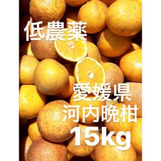 ・愛媛県 低農薬 宇和ゴールド 河内晩柑 15kg(フルーツ)