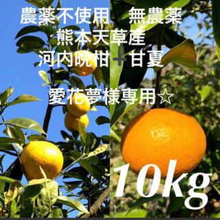 愛花夢様専用☆農薬不使用 甘夏5kg➕河内晩柑5kg  計10kg 熊本天草産(フルーツ)