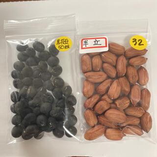 落花生種と黒枝豆種(その他)