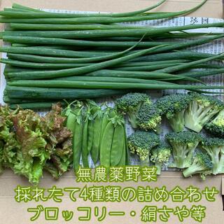 無農薬野菜*4種類の詰め合わせ*野菜セット*ブロッコリー・絹さや等*ネコポス*(野菜)