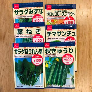 種 6種類 有効期限2021.3まで注意!!(野菜)