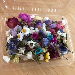 ばらばら花材②
