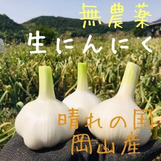 【無農薬】生ニンニク1kg「倉敷ホワイト」岡山県産にんにく サイズ混合 新鮮野菜(野菜)