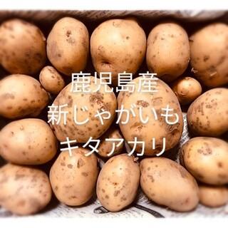 鹿児島産 農薬未使用 新じゃがいも キタアカリ 5kg(野菜)