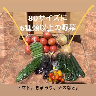 おまかせ!野菜詰め合わせセット(野菜)