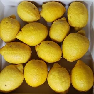 国産 無農薬 レモン 3㎏