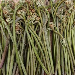 ワラビ(野菜)