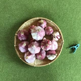 赤ニンニク(野菜)