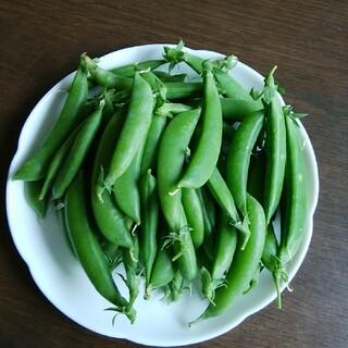 スナップエンドウ  300g(野菜)