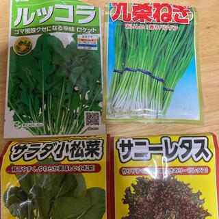 野菜 種 4種類セット おまけ付 水耕栽培 家庭菜園(野菜)