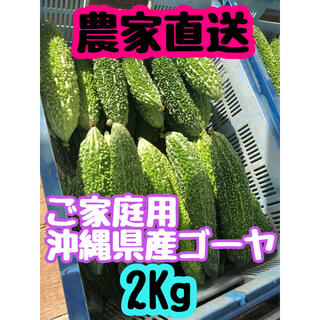 規格外 沖縄県産ゴーヤ 2Kg(野菜)