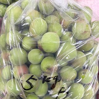 宮崎県産梅 約5キロ(ご家庭・加工用)(野菜)