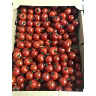 熊本県ミニトマト大粒900g(野菜)