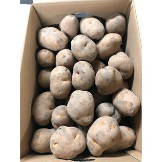 北海道産インカの目覚めLサイズ箱込み約5kg (野菜)