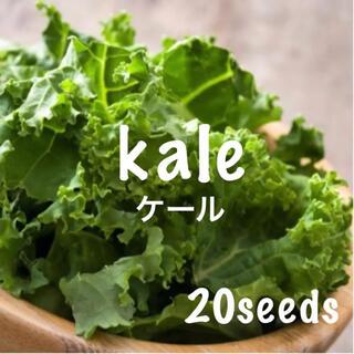 寒冷地まき時! スーパーフード ケール 種20粒(野菜)