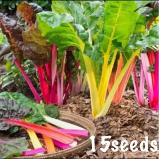 まき時! カラフルで映える! カラフルふだん菜 スイスチャード 種15粒(野菜)