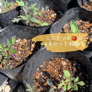 ミニトマト★4苗★無農薬(野菜)