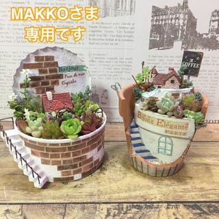 MAKKO様専用 多肉植物(その他)