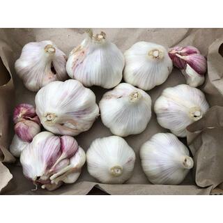 生ニンニク 無農薬 愛媛県産 約1キロ(野菜)