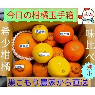 残少❗今日の柑橘玉手箱♥雪だるま=巣ごもり農家から直送中(フルーツ)