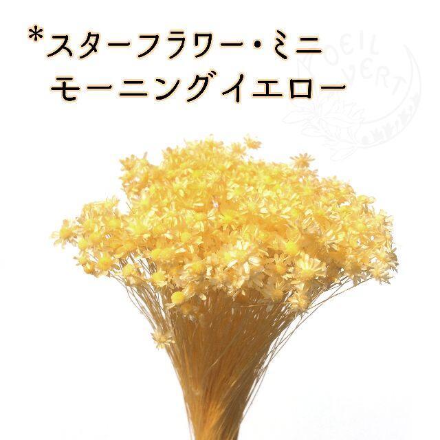 スターフラワー・ミニ モーニングイエロー 2g ハンドメイドのフラワー/ガーデン(ドライフラワー)の商品写真