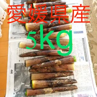 今が旬‼️布袋竹 たけのこ 5kg