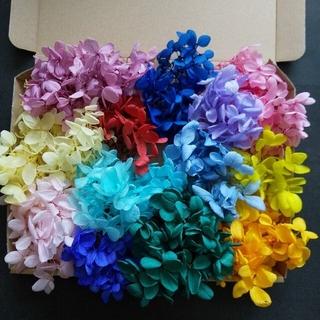 me様専用 あじさい 14色 22g プリザーブドフラワー ハーバリウム花材(プリザーブドフラワー)