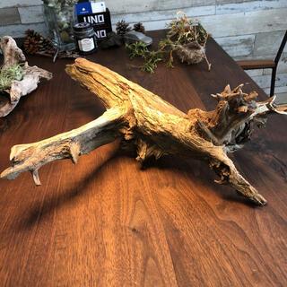 個性的迫力ある流木…天然物、オブジェに。(彫刻/オブジェ)
