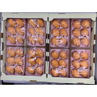 長崎県産 茂木びわ M-2L 8パック 1パック約250g(フルーツ)