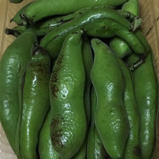 無肥料無農薬自然栽培 野菜(野菜)