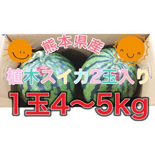 熊本県産植木スイカ2玉入り(フルーツ)
