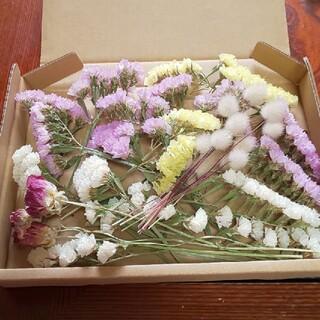 花材 ドライフラワー スターチス ラグラス ラナンキュラス セット(ドライフラワー)