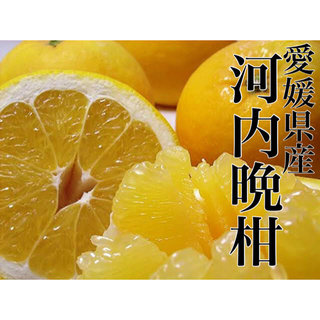 文旦終わったらコレです!!愛媛県産 家庭用【河内晩柑】2L 7.5kg 約22玉(フルーツ)