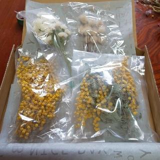 花材 ミモザ スターチス ラグラス ドライフラワーセット
