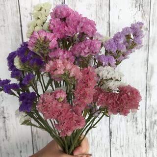 花材 スターチス ドライフラワー 6色(ドライフラワー)