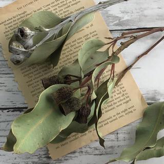 花材 ベルガムナッツとテトラゴナナッツ  ドライフラワー(ドライフラワー)