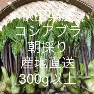 秋田県産 コシアブラ300g   産地直送  増量中