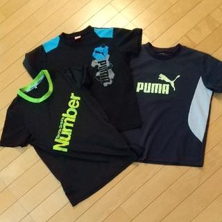PUMA - Tシャツ3枚セット 140  150