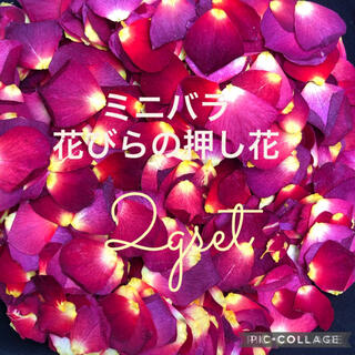 ミニバラ 花びらの押し花2gセット★ミニ薔薇 ドライフラワー 花弁★花材 素材★(ドライフラワー)