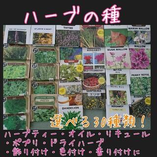 ハーブ 種 種子 野菜の種 家庭菜園 園芸 プランター サシェ ポプリ(野菜)