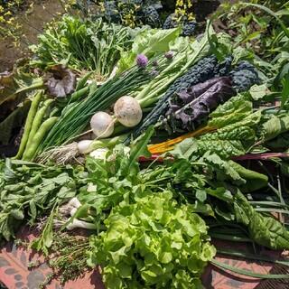無農薬野菜セット fickle beat