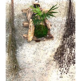 流木ハンギング アレカヤシ 苔玉 スプーンで吊るしてフォークで抱える(その他)