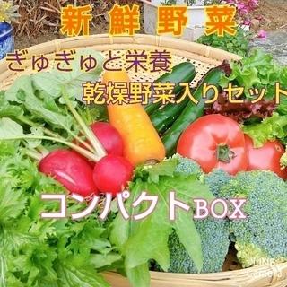 新鮮野菜【コンパクト野菜セット&ギュギュッと乾燥野菜♪】農薬不使用