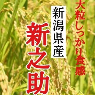 産直 新潟県産新之助 玄米10㎏(令和2年産)(米/穀物)